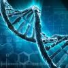 Суд назначил ДНК?